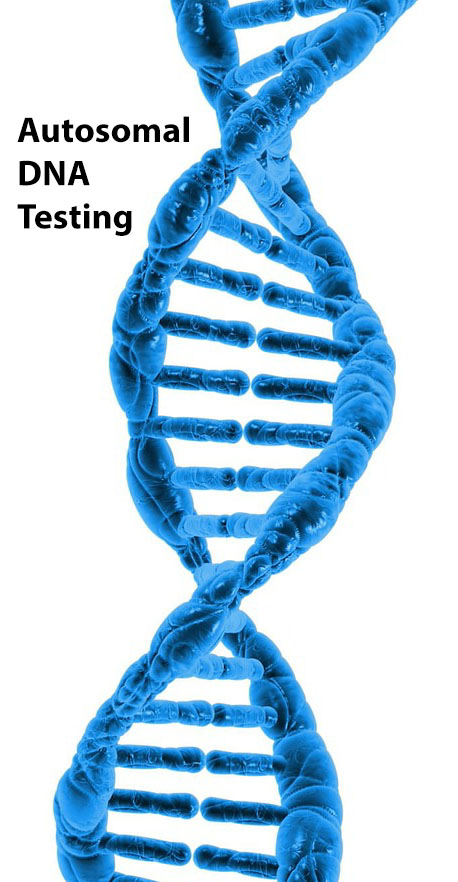 one out of 22 chromosomes and x chromosome that autosomal dna testing uses for ethnicity testing